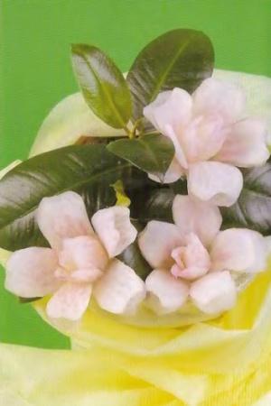 КАРВИНГ - Камелия розовая