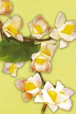 КАРВИНГ - Орхидея
